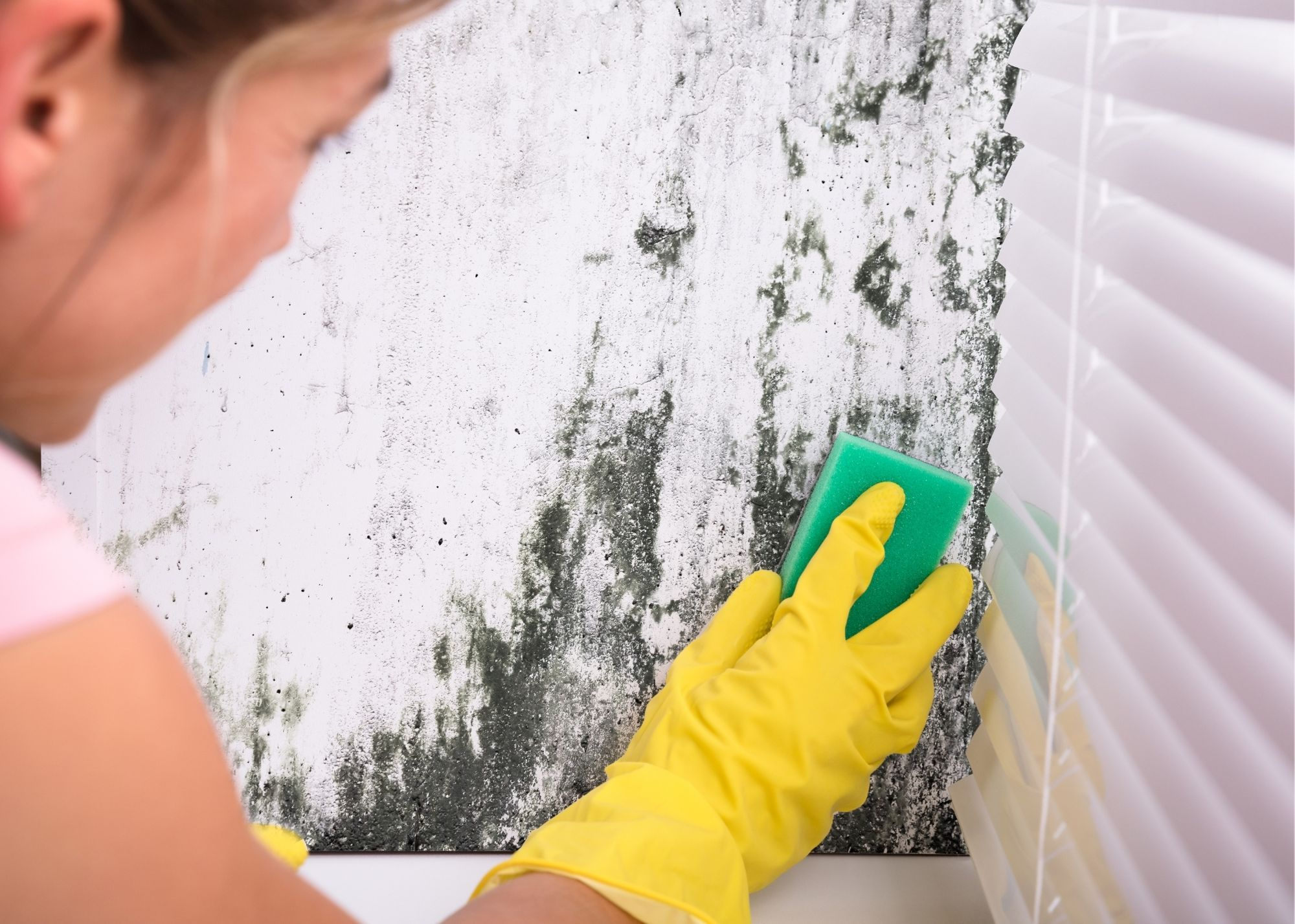 mold removal in Charlotte NC