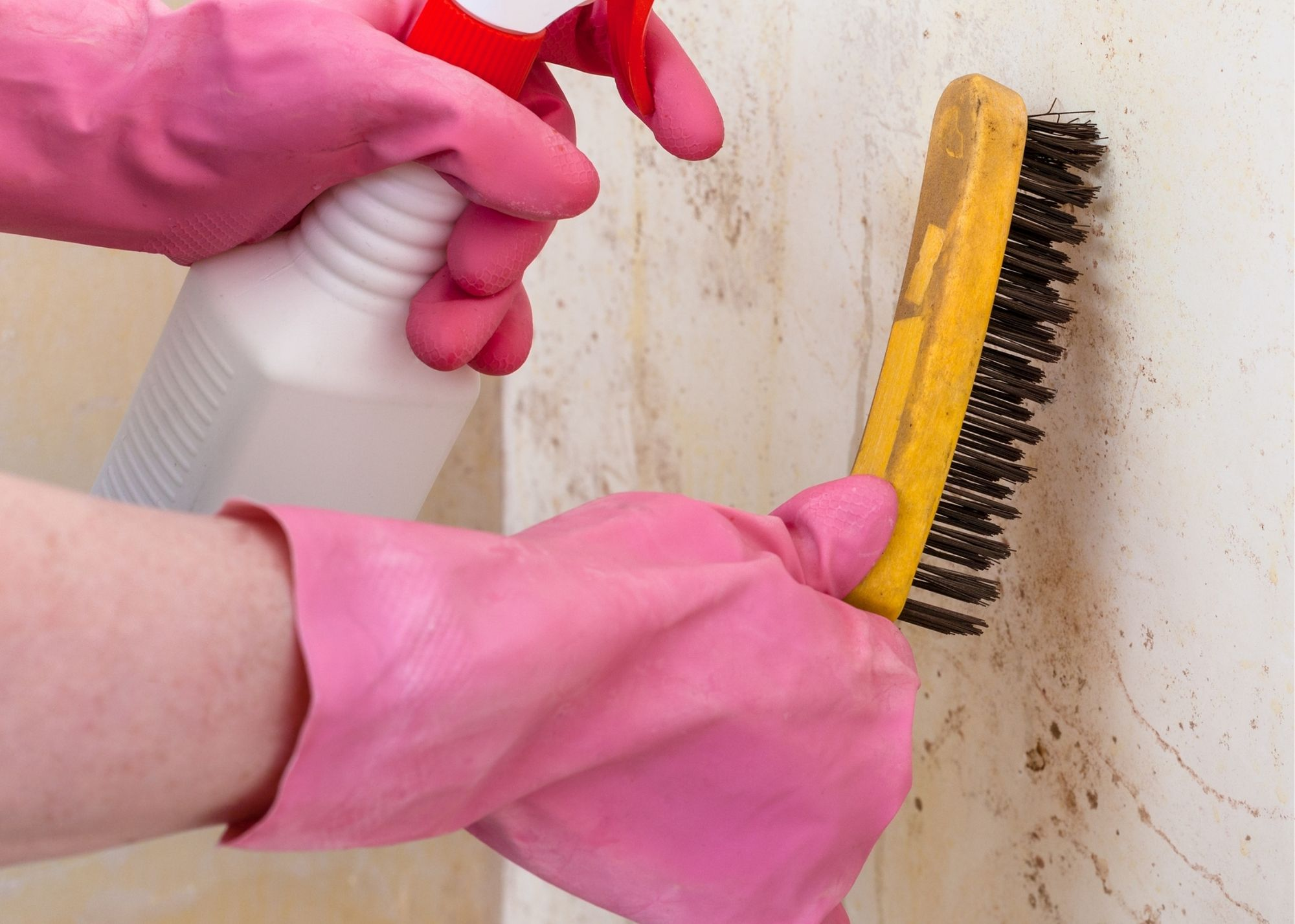 mold inspection Charlotte NC